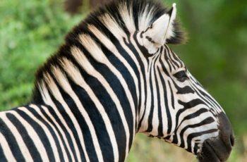 Kruger Private Reserves