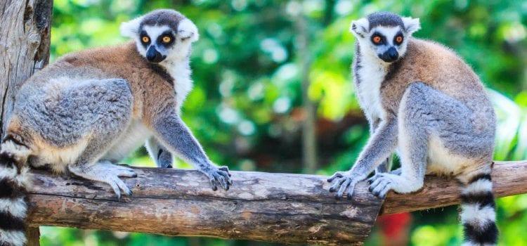 7 Reasons to Visit Madagascar